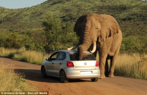 elefante sudafrica turistas 3