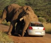 elefante sudafrica turistas 4