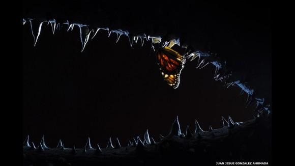 """""""Las fauces de la noche"""" fue presentada para el premio por Juan Jesús González Ahumada, de España. Todos los finalistas seleccionados para los Premios Elección del Público pueden ser vistos en www.wildlifephotographeroftheyear.com"""