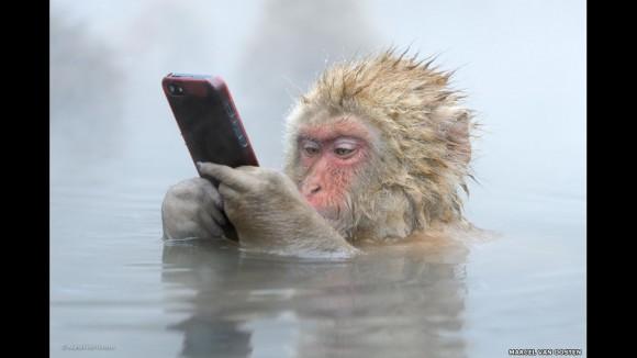 """""""Facebook update"""" (Actualización de Facebook) es una de las 50 imágenes preseleccionadas en esta ocasión y por primera vez por el jurado de la competencia Wildlife Photographer of the Year (Fotógrafo de vida silvestre del año), para que el público vote por su preferida."""
