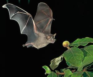 Investigan a extraño murciélago blanco en Matanzas