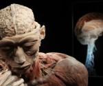 Neurocientíficos de la Universidad de Adelaide, Australia, han encontrado una parte del cerebro humano que mantiene el mismo nivel de funcionamiento a todas las edades  Foto: Reuters