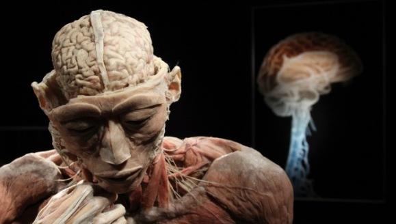 Neurocirujanos hallan una zona del cerebro que no envejece