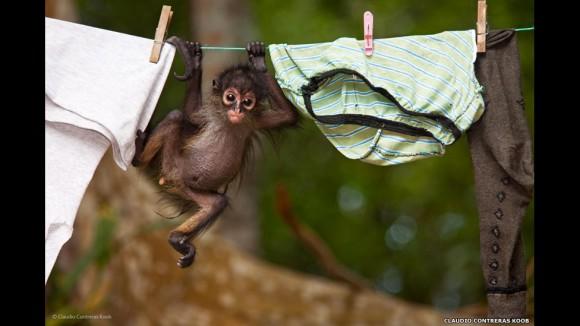 """Old cloths"""" (ropa vieja) fue presentada por Claudio Contreras Koob, de México."""