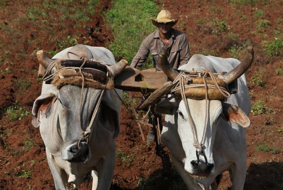 Pinar del Río: Agencias de viaje incluyen al sector no estatal en sus ofertas de alojamiento