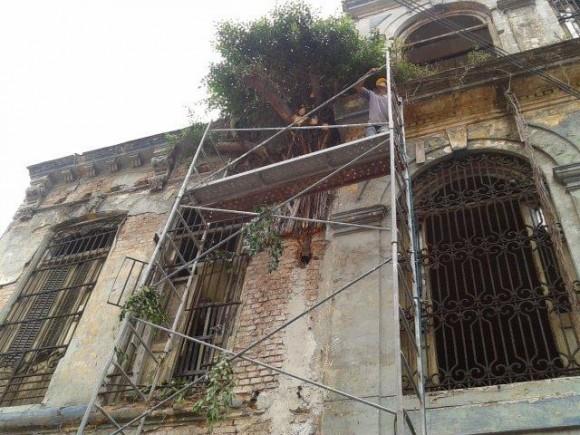 Árbol en edificación calle Bernaza, La Habana. Foto: Eurídice Averhoff Pérez / Cubadebate