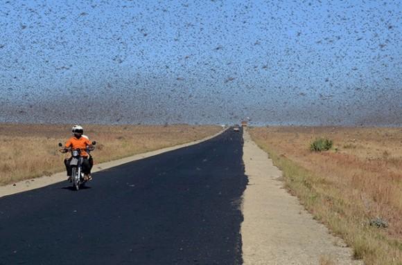 Plaga de proporciones bíblicas invade el cielo de Madagascar