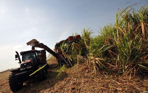 Comenzó zafra azucarera en provincia central cubana.