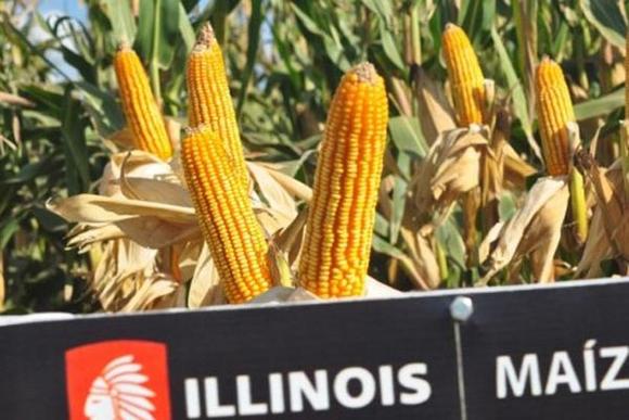 Productores de maíz de Illinois pedirán a Obama cambiar política sobre Cuba