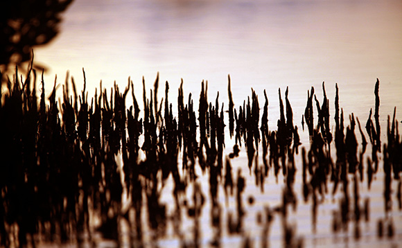 Vegetación en la desembocadura del Río Máximo. Foto: Ismael Francisco/ Cubadebate.