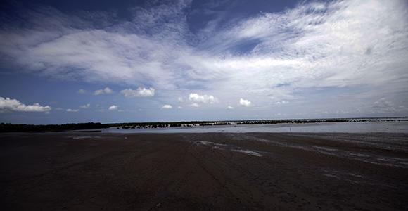 Refugio de Fauna Río Máximo, la mayor zona del mundo de Flamencos del Caribe. Foto: Ismael Francisco/ Cubadebate.