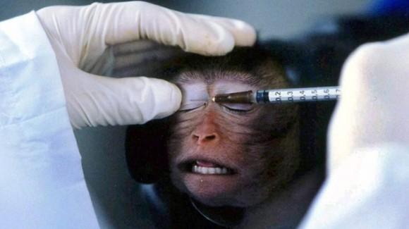 experimento con animales