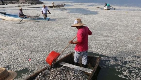 Pescadores locales denuncia que la situación es más grave que la manejada por las autoridades. Foto: EFE.