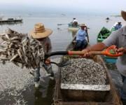 Se han reportado cuatro casos de muerte masiva de peces en lo que va de año. Foto: EFE.