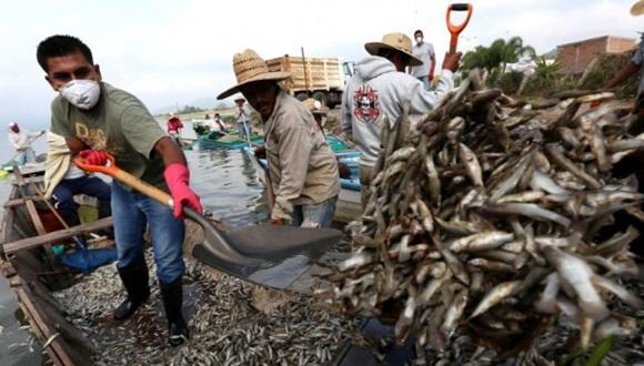 Se desconoce con precisión la causa de la muerte de los peces de la laguna. Foto: EFE.