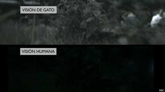 vision_gatuna