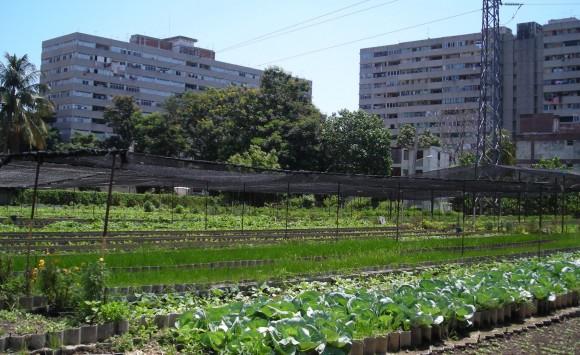 Agricultura Urbana Habana_2011-107