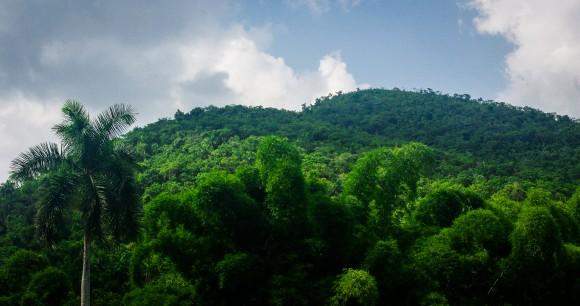 Comunidad Las Terrazas, actualmente provincia Artemisa. La zona es reserva de la biosfera y está ubicada en la Sierra del Rosario. Foto: Daniel Jesús González Quiñones./ Cubadebate