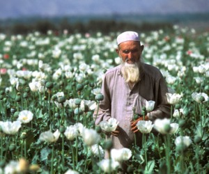 amapolas afganistán