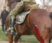 caballo maltratado