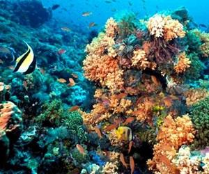 Científicos norteamericanos y cubanos analizarán arrecifes de coral en la isla