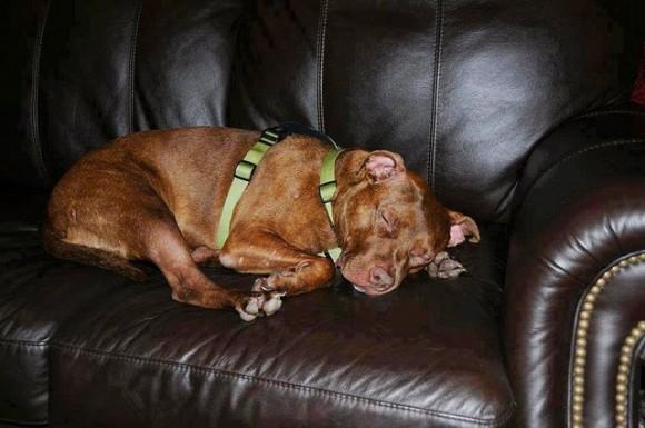 Por lo que fueron viendo, era un perro dócil y muy juguetón. Patricia, la contable de la clínica veterinaria, lo adoptó y él se adaptó rápidamente a su nueva vida.