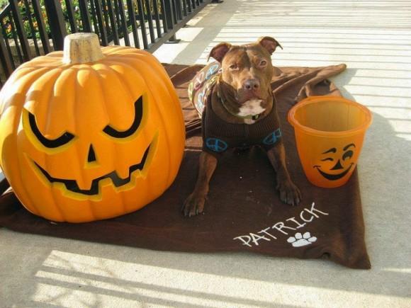 Patricia dice que es el perro más dulce que ha tenido nunca. Sigue siendo tímido con los extraños pero basta que le den una galletita para que se hagan amigos.