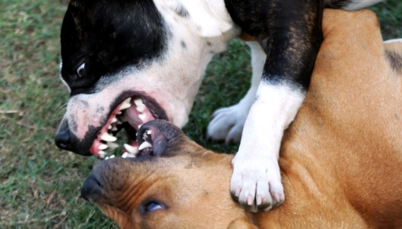 La Mesa Redonda se acerca este viernes al tema de las actitudes negativas en la relación con los animales y su impacto en la formación de valores humanos.