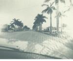 Avenida de palmas en Miami