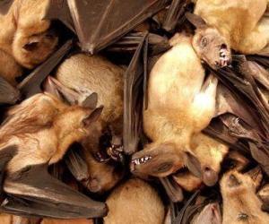 Comienza I Festival para la Conservación de Murciélagos en Cuba.