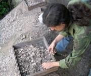 En contacto con la evidencia arqueológica. Ulises González forma parte del equipo que realiza excavaciones en el sitio matadero Canímar Abajo, encabezado por Roberto Rodríguez, del Museo Montané. Foto: Catherine Álvarez.