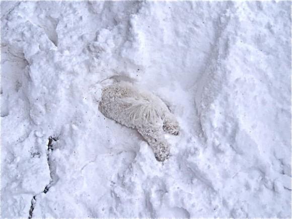 Animales en la nieve (1)