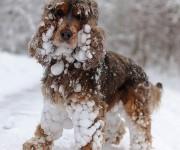 Animales en la nieve (5)