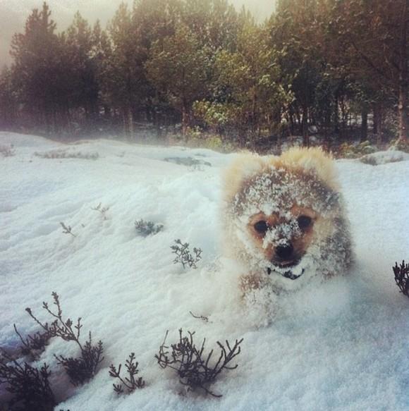 Animales en la nieve (6)