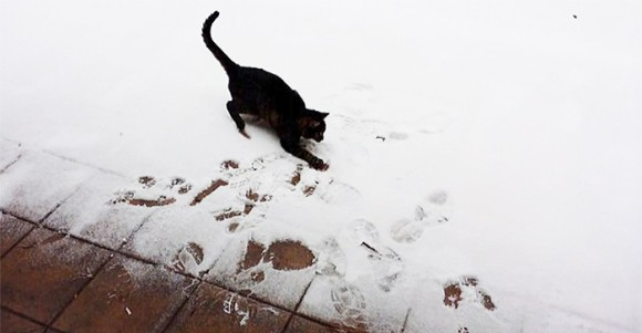 Animales en la nieve (7)