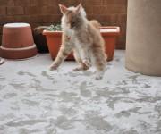 Gato (3)