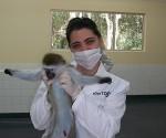 dengue cuba vacuna 1