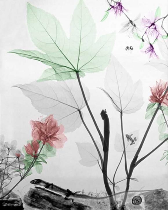 fatsia-azalea-rododendron-lizard