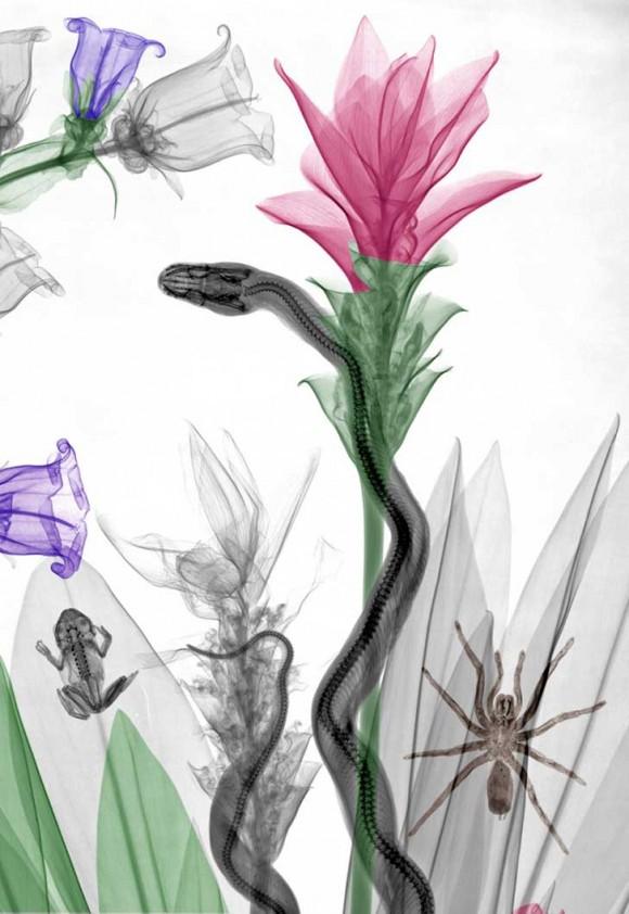 snake-curcuma