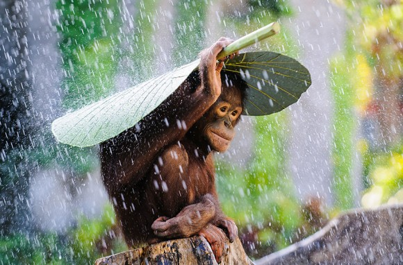 Foto: Andrew Suryono, Indonesia.