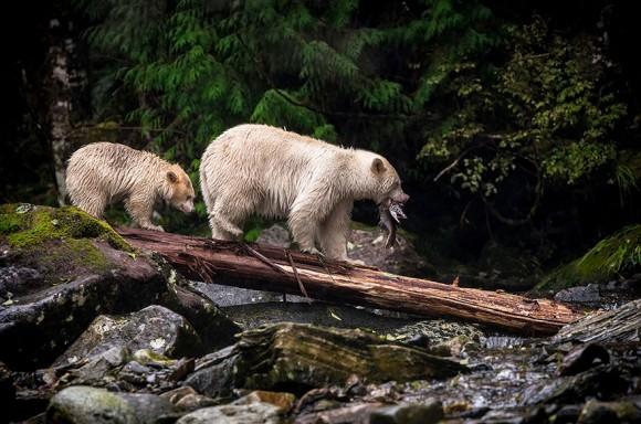 Foto: Kyle Breckenridge, Canada.