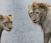 Visita al Zoológico Nacional de mandatarios del Caricom. Foto: Ismael Francisco/ Cubadebate