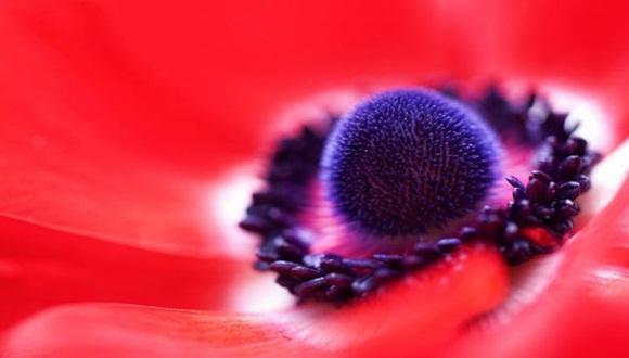 Jacob Edmiston muestra en esta fotografía, otra de las mejores para Flickr, la naturaleza a su máximo detalle, con la imagen de esta increíble anémona.