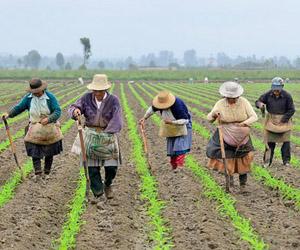 Los campesinos cubanos se re nen a partir de hoy en su for Noticias del espectaculo mexicano del dia de hoy