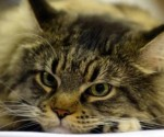 gato callejero