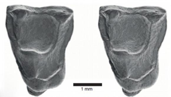 fosil.jpg