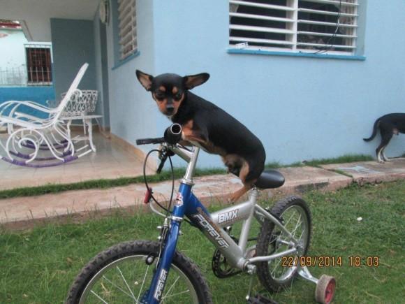 Ciclista. Foto: Henry Delgado, de Cárdenas / Cubadebate