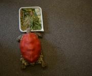 Tortuga-Clopatra-impres-3d