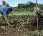 agricultura-cubana