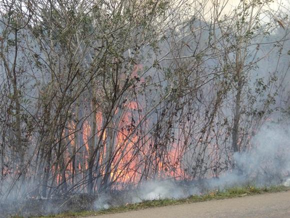 Más de mil 770 hectáreas, de ellas 30 de bosque natural, permanecen amenazadas por las llamas en la Ciénaga de Zapata.  AIN FOTO/Cortesía Cuerpo de Guardabosques de Matanzas.